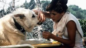 whitedog1982-7